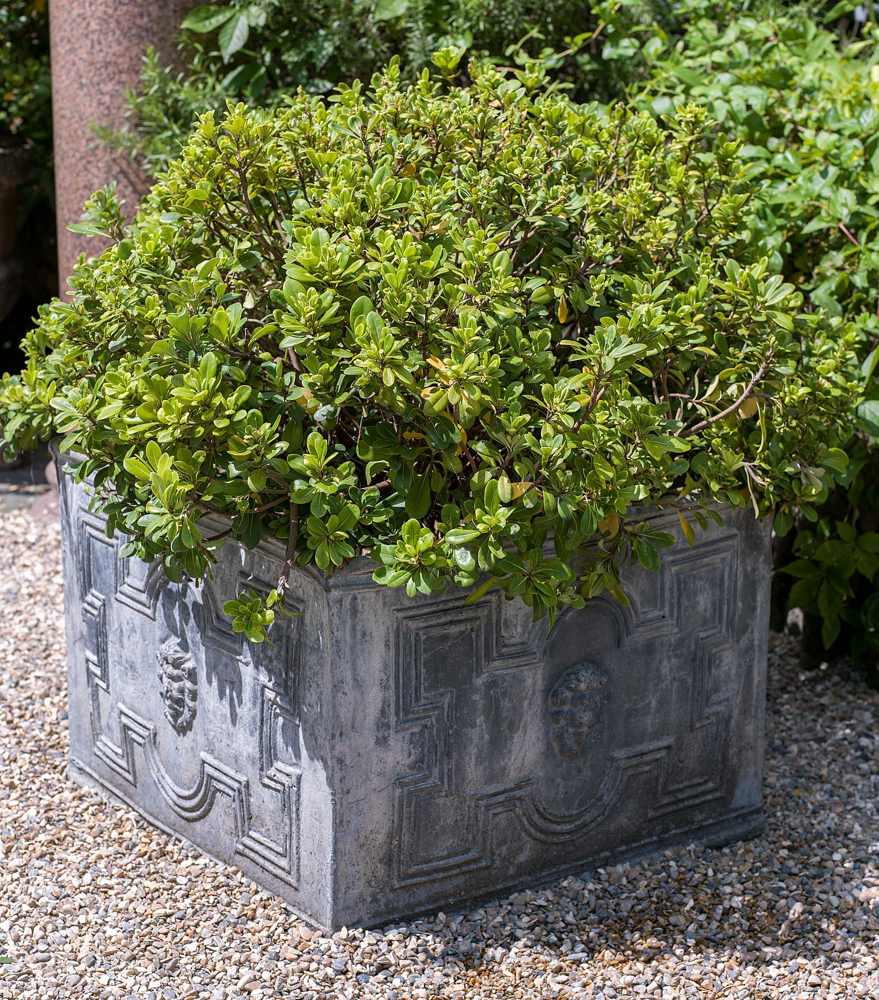 Late Victorian large lead garden planter