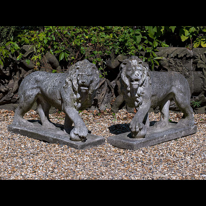12872: ONE OF TWO PAIRS OF COMPOSITION STONE ' MEDICI LIONS ', since 1789 the originals are to be found on the steps of the Loggia dei Lanzi in Florence italy. Both lions in matching  prowling stance with on